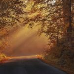 Autumnal Beautiful Color